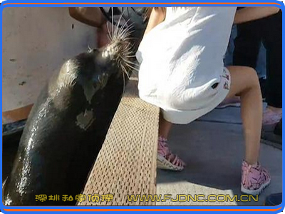原来海狮也这么色!www.fj